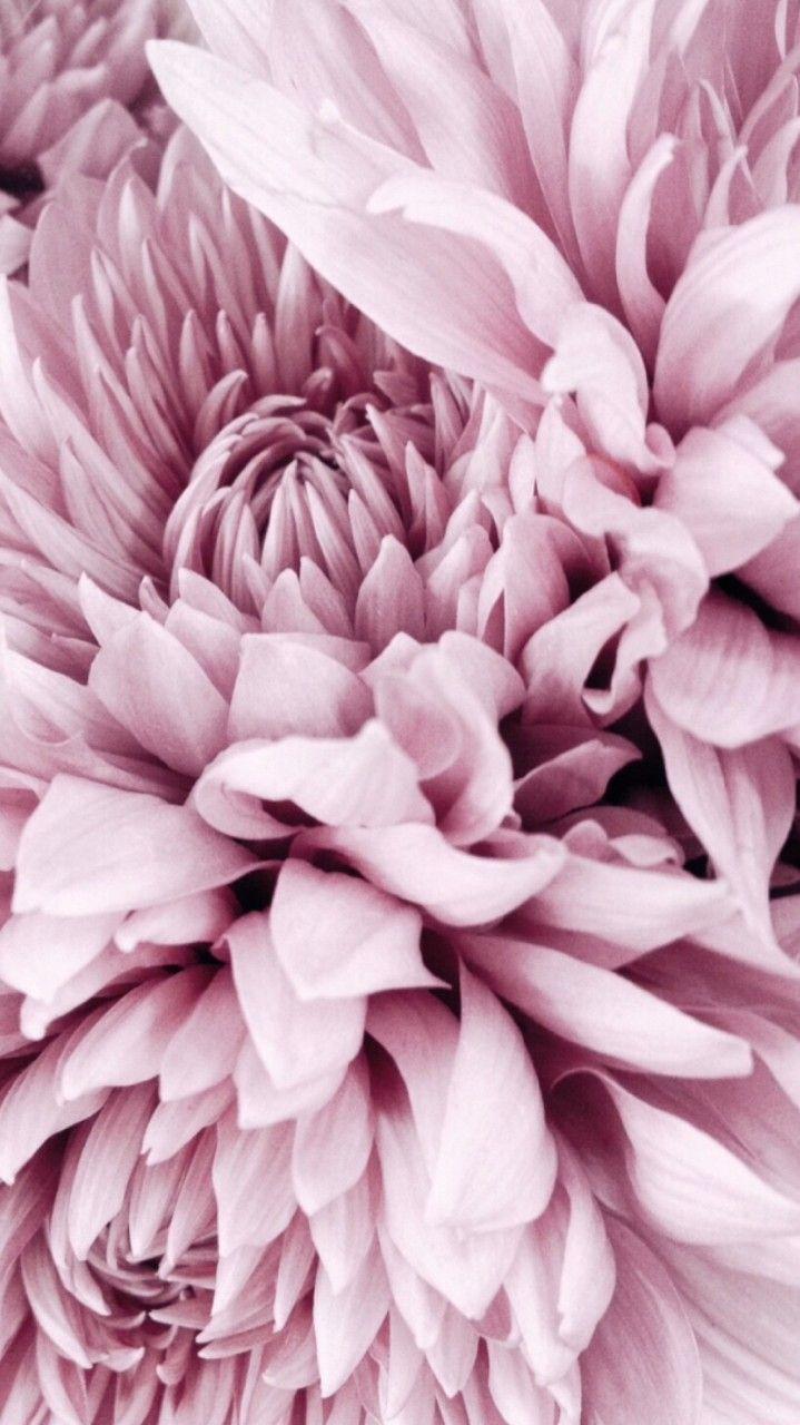 Dahlie   – 50 shades of pink – #Dahlie #Pink #shades