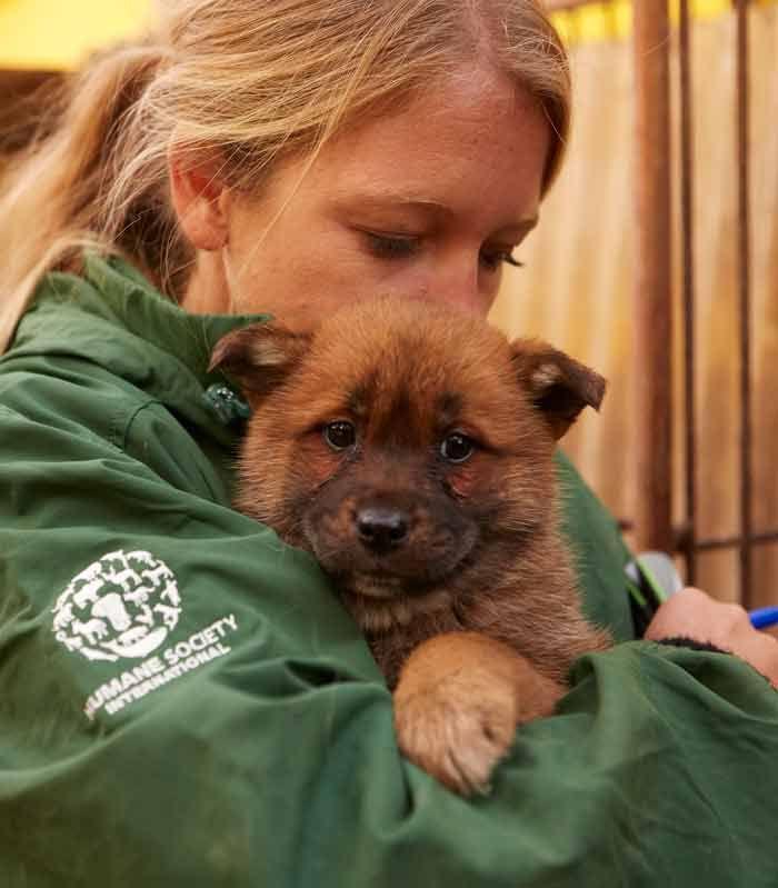 Humane Society International Humane Society Animals Animal Activist