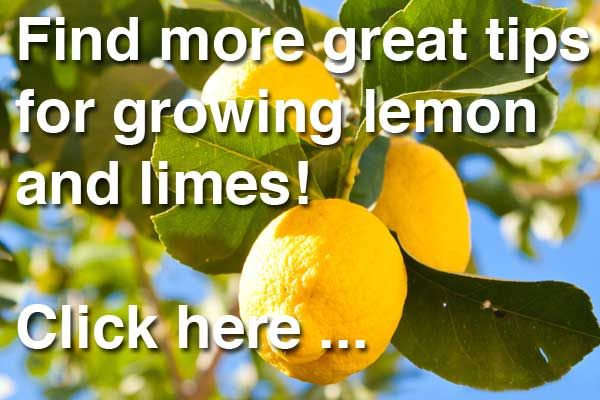 How to grow a lemon tree | Every Aussie yard needs this essential citrus | Reader's Digest Australia