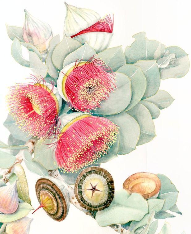 Australian native flowers watercolour