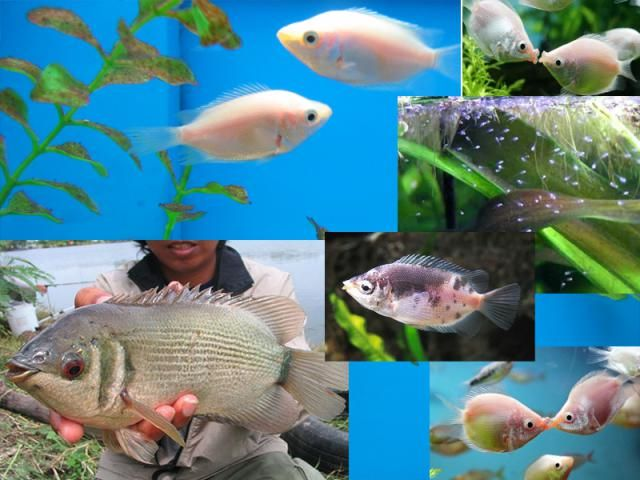Most unusual fish bing images for Weird freshwater fish