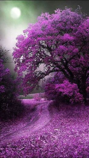 Melancholie in violett