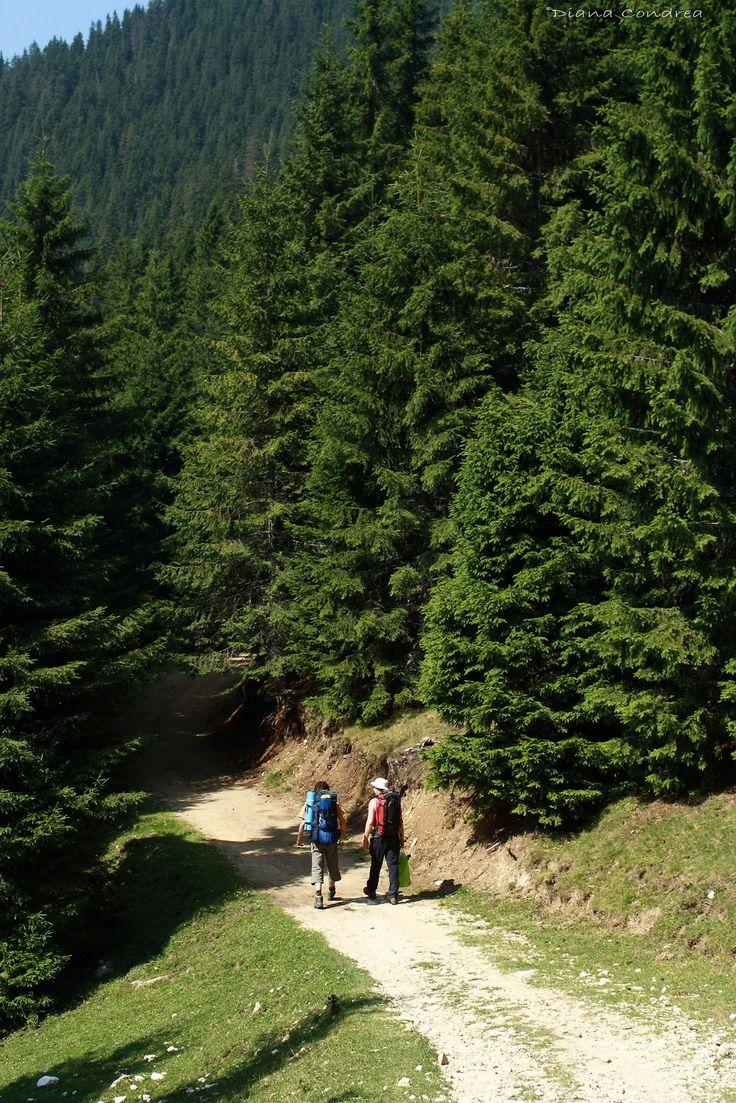 Piatra Craiului Mountains :: Uncover Romania