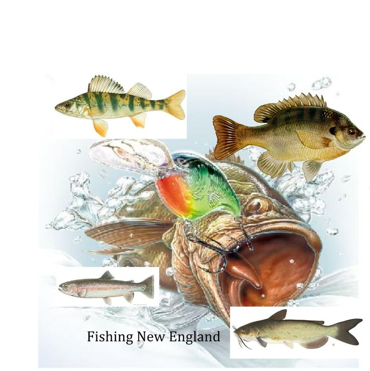44 best images about fishing in new england on pinterest for New england fishing