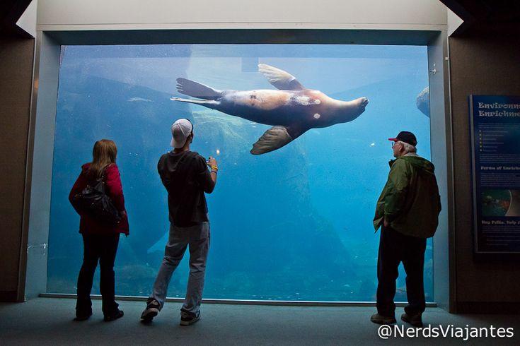 Seward – Alaska SeaLife Center | Nerds Viajantes