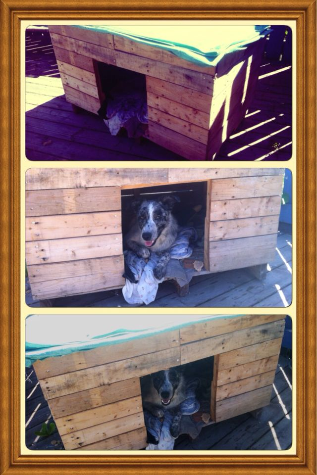 A nice cozy house for Kora build from pallets. She just loves it in there.
