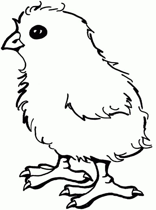 37 best coloring pages baby animal images on pinterest | drawings ... - Baby Chick Coloring Pages Print