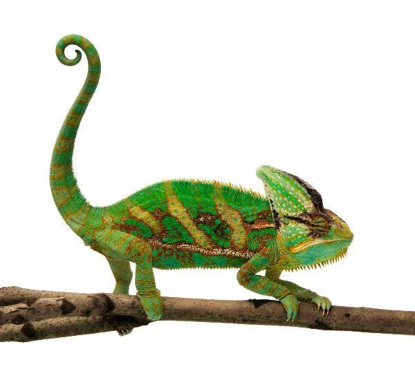 37 Best Galapagos Marine Iguana Images On Pinterest