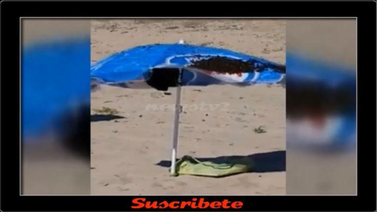 Enjambre de Abejas Llega a una Playa y Forma un Nido en una Sombrilla