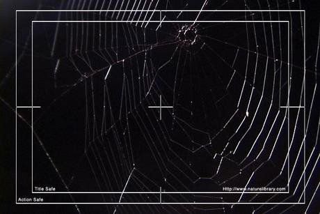 Royalty Free Stock Footage : Spider Web : NL00506