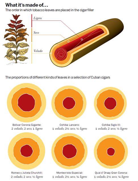 Cigar Anatomy - The Anatomy of the Tobacco Plant