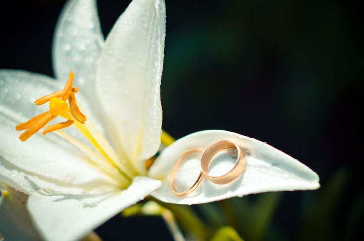 Wedding rings on lily