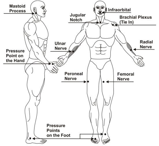 Dog Pressure Points For Training