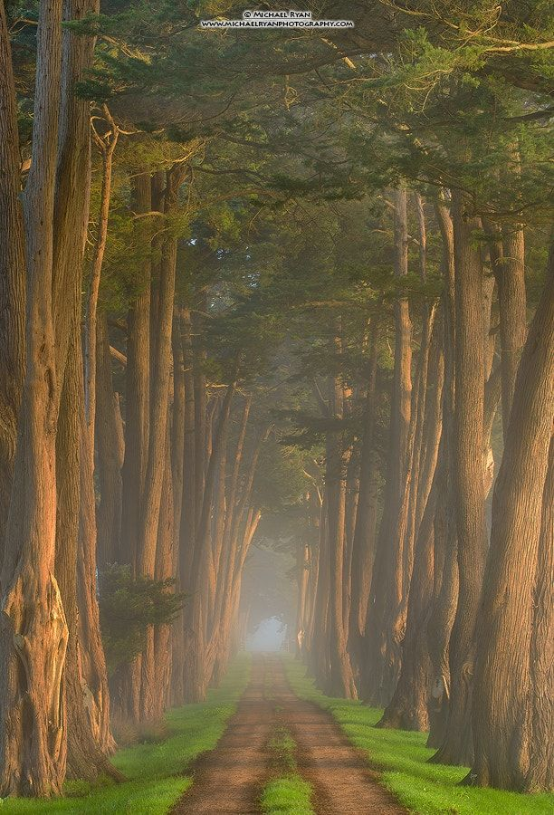 Cypress-lined lane (California) by Michael Ryan / 500px