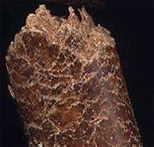 Wood Pellet closeup