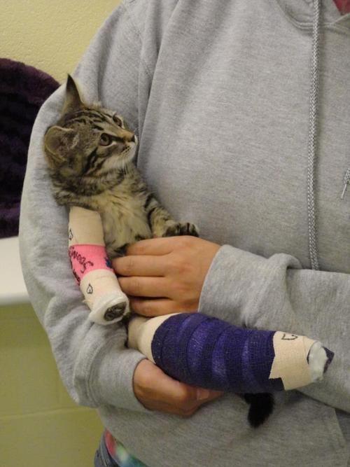 cat in plaster