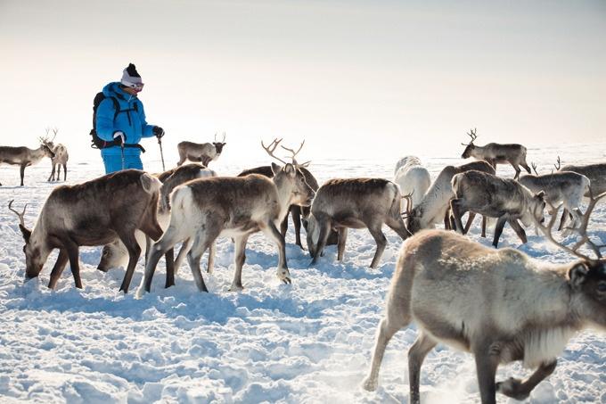 Reportage de Muonio à Kilpisjärvi, entre balades en raquettes, légendes samis et chiens de traîneau