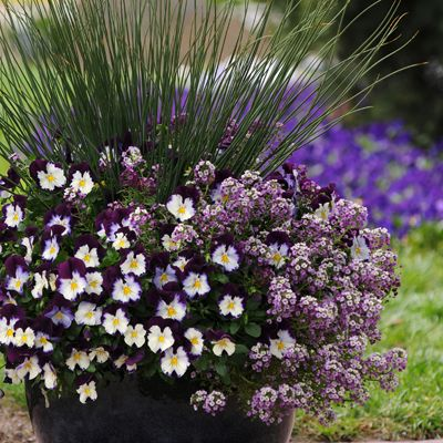 Birds & Blooms Blogger Noelle is planning now for spring garden improvements. She recommends trying some new combinations in the garden this year, like this display of ornamental grass, pansies, and alyssum.