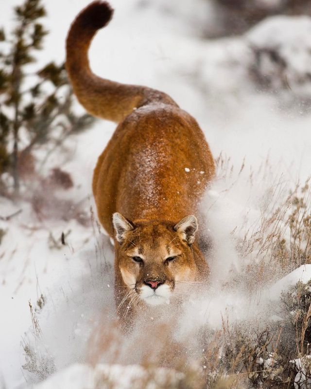 Big cats are awesome!