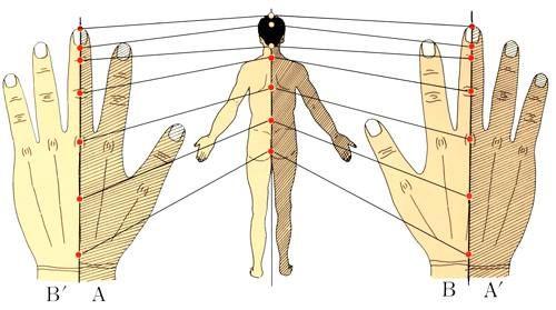 Wist je dat je pijn in je nek en schouder kan verminderen door de achterkant van je middelvinger te masseren? De achterkant van het tweede kootje van je middelvinger komt overeen met de achterk…