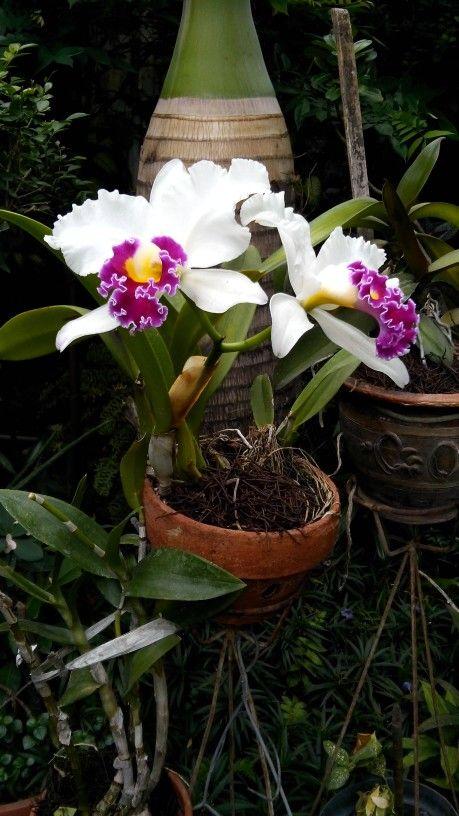 Flowers from auntie's garden.