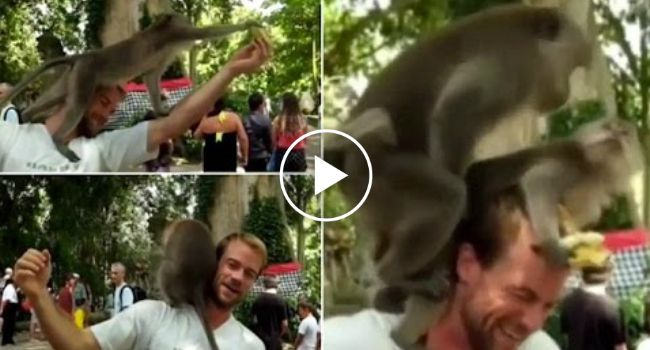 Macacos Sobem Para Cima De Ombro De Turista e Decidem Acasalar Ali Mesmo http://www.desconcertante.com/macacos-sobem-para-cima-de-ombro-de-turista-e-decidem-acasalar-ali-mesmo/