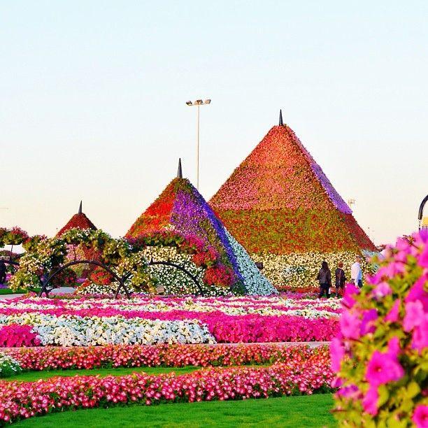 حديقة الزهور ميراكل، دبي الإمارات  Miracle Garden, Dubai, UAE  By @sharlajeanah must see