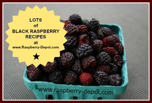 Looking for BLACK RASPBERRY RECIPES? Here are 100's of recipes you can use for recipe ideas with Black/Wild raspberries including Black Caps.