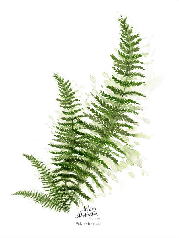 Ferns, print margohupert.pl