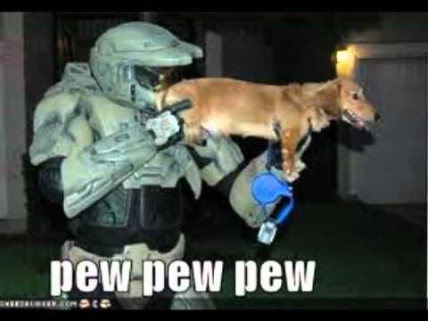 Dogs And Cats With Guns | www.pixshark.com - Images ...