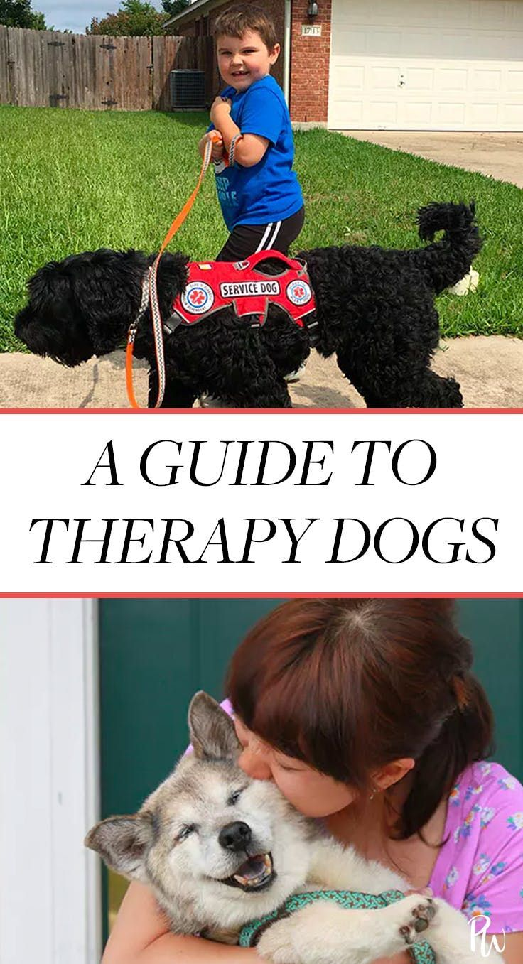 So What S The Deal With Therapy Dogs Anyway Therapy Dogs