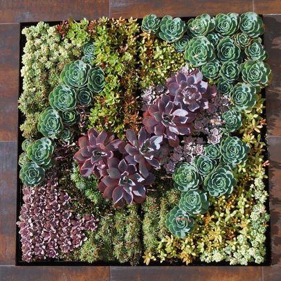226 best   images on Pinterest | Gardening ...