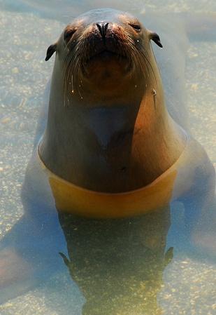 Állatok a Galapagos Photo Gallery: Lizard, teknősök, tengeri oroszlánok és Iguanas | Away.com