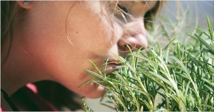 Esta é uma das mais poderosas ervas medicinais.