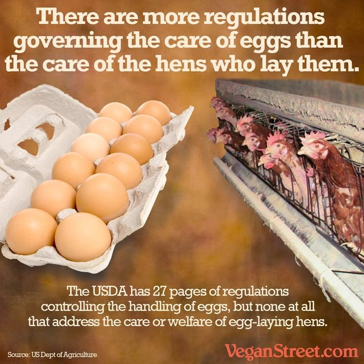 Image result for why eggs arent vegan