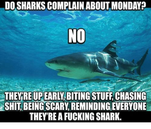 Image result for monday shark complain meme