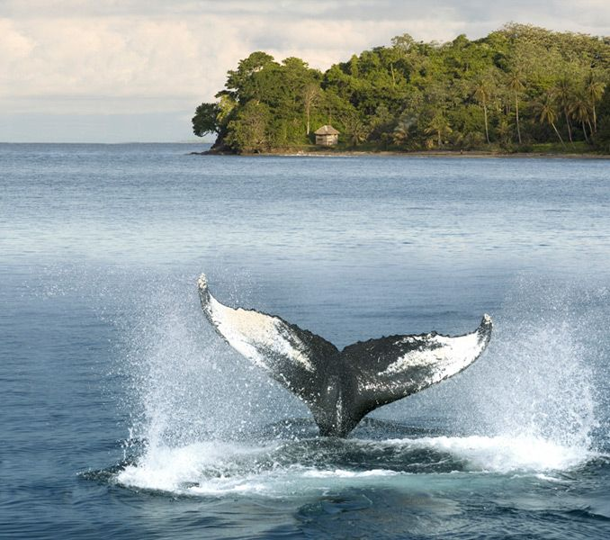 whale tale -- Choco, Colombia