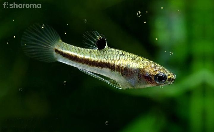 15 Small Freshwater Fish For Nano Aquariums All Inclusive Guide Tropical Freshwater Fish Nano Aquarium Tropical Fish Aquarium