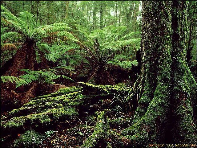 Australia Barrington Tops National Park