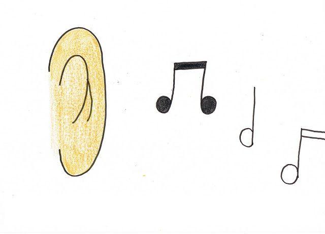 zmysly - uši - sluch