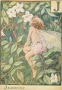 Jasmin flower fairy  by Cicely Mary Barker: Jasmine Fairies, Flowers Fairies, Fairies Alphabet, Fairies Prints, Fairies Artists, Faeries Enchanted, Jasmine Flowers, Antiques Jasmine, Cicely Mary Barker