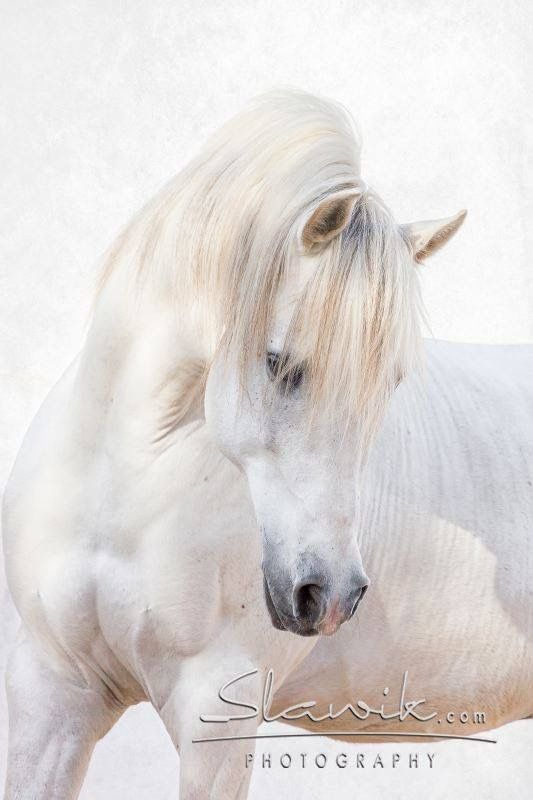 https://feelmyvibe.com/collections/all/horse-paintings