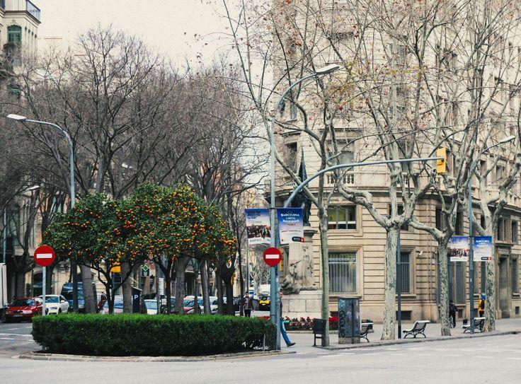"""Мама попросила выкладывать больше улиц, """"а то все крыши, да птицы"""". Вот улица :)  #барселона #испания #barcelona #spain #travel #vscorussia"""