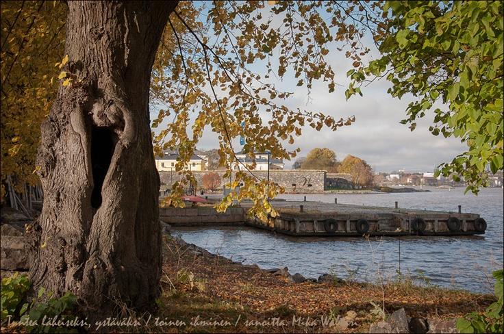 The Tree of Life, Sea Fortress of Suomenlinna, Helsinki. Photo © Soili Mustapää 2013