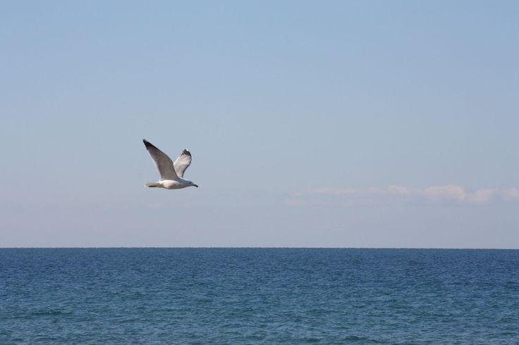 Un gabbiano in volo sul mare di Castellabate