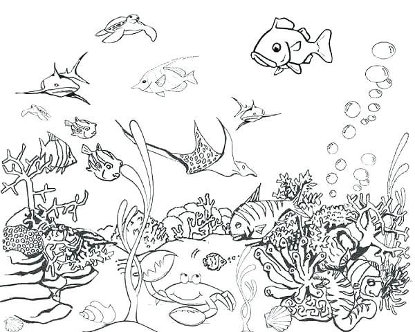 Realistic Ocean Animals Coloring Pages 2649819 600x480 Jpeg Ocean Coloring Pages Sea Animals Drawings Animal Coloring Pages