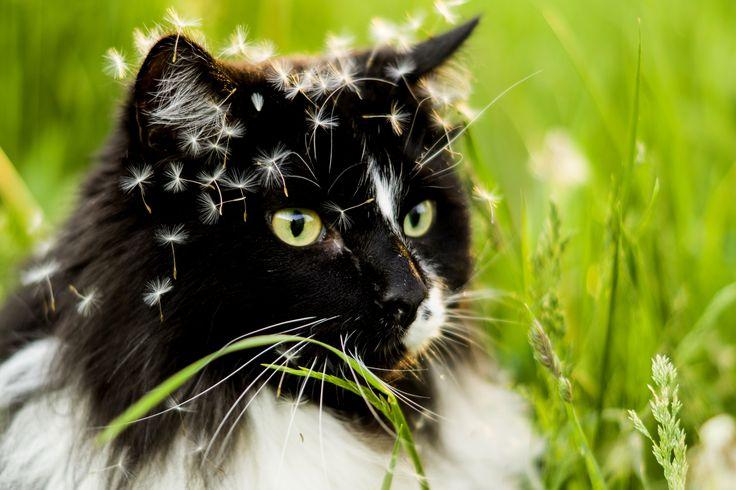 кот в одуванчиках, cat