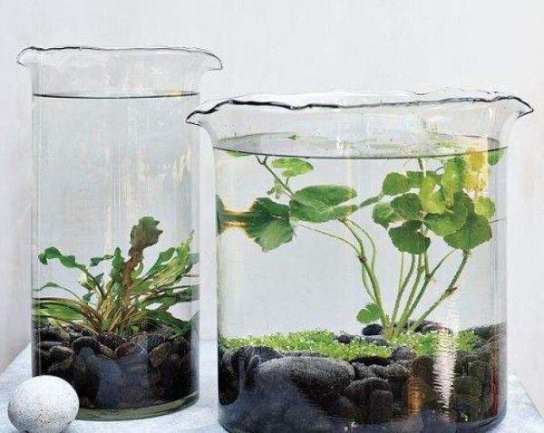 Los jardínes acuáticos de interior son sencillamente un recipiente de cristal transparente en el que imitamos la estructura de un pequeño estanque pero dentro de casa y en forma reducida