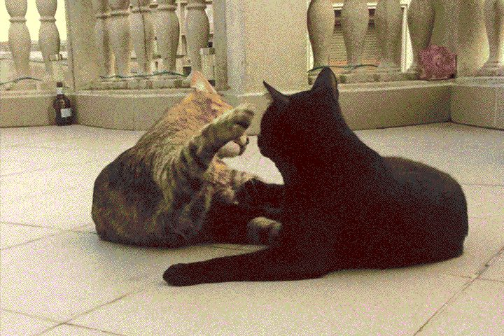 #metoxicat #metoxil #cat #paw #play