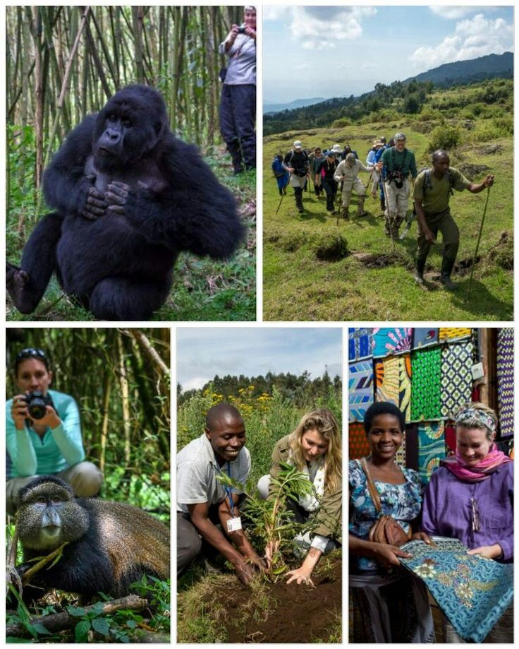 Our Rwanda experience aims to offer life-affirming experiences from exploring Kigali to gorilla and golden monkey trekking in Volcancoes National Park, community encounters, tree-planting and even shopping!
